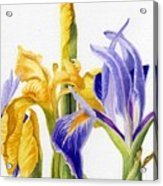 Iris And Flag Acrylic Print