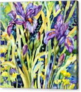 Iris Acrylic Print by Ann  Nicholson