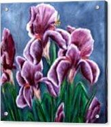 Iris Awakens Acrylic Print by Penny Everhart