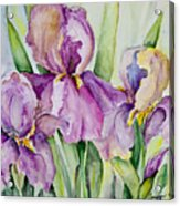 Iris Beauties Acrylic Print