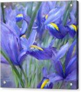 Iris Bouquet Acrylic Print