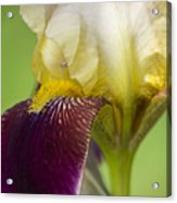 iris Closeup 2 Acrylic Print