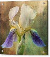 Iris Composite Acrylic Print