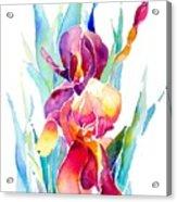 Iris Designz Acrylic Print