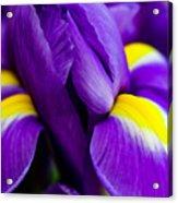 Iris Detail 2 Acrylic Print