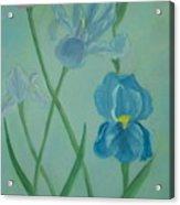 Iris Dreams Acrylic Print by Alanna Hug-McAnnally