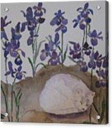 Iris Dreams Acrylic Print