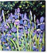 Iris En Folie Acrylic Print