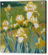 Iris Etude Acrylic Print