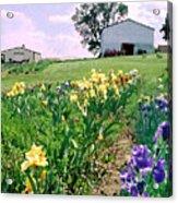 Iris Farm Acrylic Print