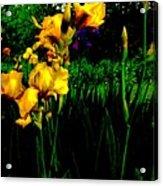 Iris Field In Abstract Acrylic Print