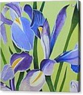 Iris Fields - Center Panel Acrylic Print