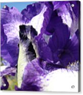 Iris Flower Art Print Purple Irises Botanical Floral Artwork Acrylic Print