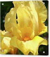 Iris Flower Floral Art Prints Orange Irises Acrylic Print
