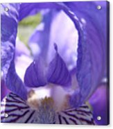 Iris Flower Purple Irises Floral Botanical Art Prints Macro Close Up Acrylic Print