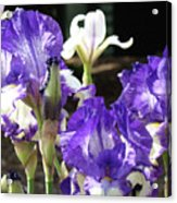 Iris Flowers Floral Art Prints Purple Irises Baslee Troutman Acrylic Print
