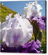 Iris Flowers Purple White Irises Poppy Hillside Landscape Art Prints Baslee Troutman Acrylic Print