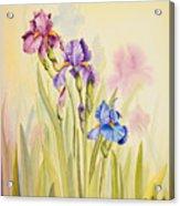 Iris Garden Ll Acrylic Print