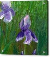 Iris Garden Acrylic Print
