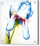 Iris II Acrylic Print