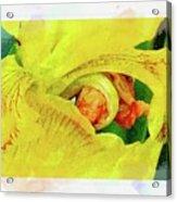 Iris In Abstract Acrylic Print