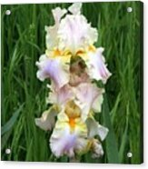 Iris In Grass Acrylic Print