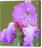 Iris In Summer Rain  Acrylic Print