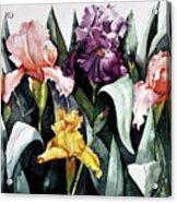 Iris Integration Acrylic Print