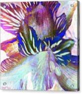 Iris Iv Acrylic Print