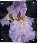 Iris Acrylic Print by Lawrence Supino