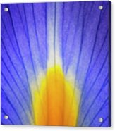 Iris Leaf Abstract Acrylic Print