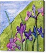 Iris Meadow Acrylic Print