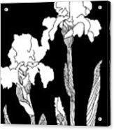 Iris Notan Acrylic Print