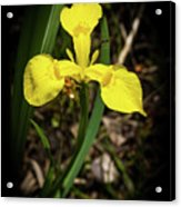 Iris Of The Marshes - 1 Acrylic Print
