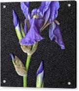 Iris On Black Leather Acrylic Print