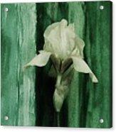 Iris On Green Acrylic Print
