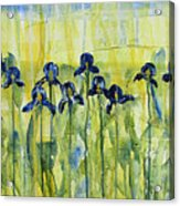 Iris On Parade Acrylic Print