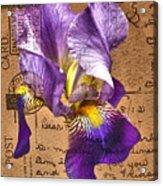 Iris On Vintage 1912 Postcard Acrylic Print