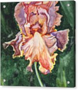 Iris On Yupo Acrylic Print