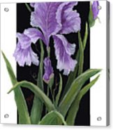 Iris One Acrylic Print