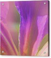 Iris Panorama Acrylic Print