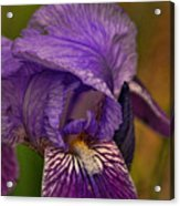 Iris Popping Out Acrylic Print
