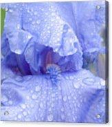 Iris Rainy Day Blue Acrylic Print