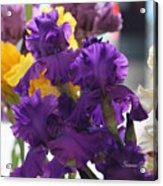 Iris Study Acrylic Print