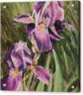 Iris Twins Acrylic Print