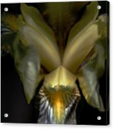 Iris Two Acrylic Print