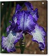 Iris Unraveled Acrylic Print