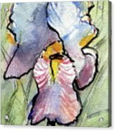Iris With Impact Acrylic Print