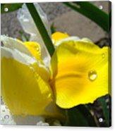 Irises Artwork Iris Flowers Art Prints Flower Rain Drops Floral Botanical Art Baslee Troutman Acrylic Print