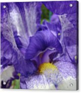 Irises Artwork Purple Iris Flowers Art Prints Canvas Baslee Troutman Acrylic Print